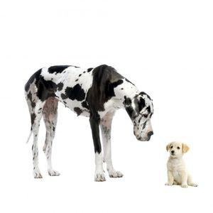 122_chiens grand et petit_resultat-935b845587